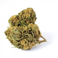 Fleur de CBD - Harlequin Haze